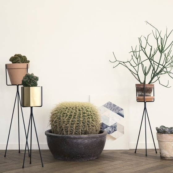 ferm_plant_stands_group_with_cactus_life_800