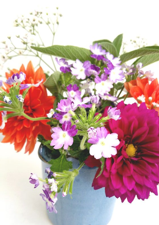 dahlias, verbena, gypsophila and sage in blue jug